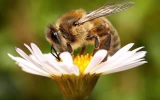 Применение пчелиного воска, польза и вред, свойства, видео