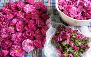 Как применять лепестки роз в домашних условиях