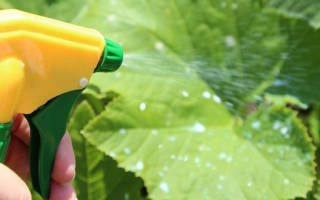 Применение нашатырного спирта в садоводстве, дозировка, видео