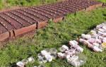 Гладиолусы — посадка в открытый грунт, подготовка почвы, сроки высадки, видео