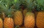 Свежий ананас — как хранить, дозреть зеленый, замороженный ананас. видео
