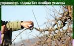 Обрезка по Курдюмову — правила формирования крон груш и яблонь