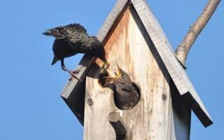 Скворечник своими руками для разных видов птиц, как сделать, видео