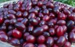 Кизил ягода — где растет, как выглядит, посадка и уход, выращивание из косточки, фото, видео