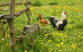 Июнь — заготовка зеленых кормов для животных, откорм молодой птицы, видео