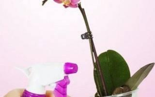 Гидрогель для растений — как пользоваться, применение, состав, видео