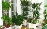 Растения для спальни — какие можно и нельзя держать в спальне, видео