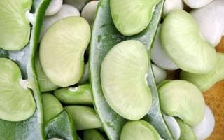Фасоль лима — как вырастить, когда собирать урожай, как хранить масляную фасоль, видео