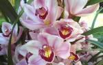 Горшки для орхидей — как выбрать, кашпо, плошки, видео