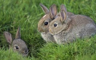 Полезные статьи о кроликах