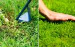 Как выбрать газонную смесь, какие газоны и травы лучше, видео