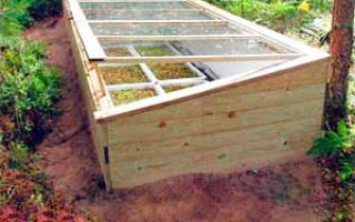 Парник из старых оконных рам — используем для выращивания рассады, видео