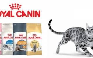 Корм Роял Канин для кошек — специальные линейки для котят, стерилизованных котов, больных животных, видео