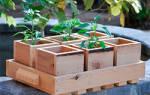 Ящики для рассады из — жести, досок, деревянные, видео