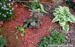 Мульчирование почвы — органическая и неорганическая мульча, видео