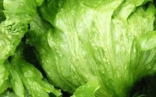 Чем полезен салат айсберг для организма, противопоказания, видео