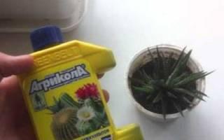 Агрикола: удобрение для комнатных растений, инструкция по применению, видео