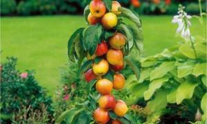 Колоновидные плодовые деревья — особенности и недостатки, обрезка