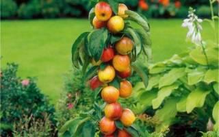 Колоновидные плодовые деревья — саженцы для Краснодара, Подмосковья, сорта, особенности ухода и обрезки, фото, видео