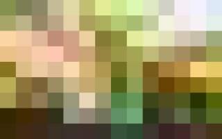 Весенняя дачная клумба из гиацинтов — видео