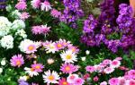 Как подобрать однолетние цветы для клумбы, схема, фото, видео