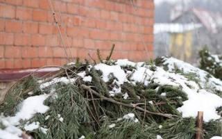 Январь — цветочные хлопоты, проверка посадочного материала, закупка семян, видео