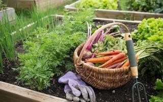 Сентябрь в огороде — сбор урожая и закладка на хранение, подготовка грядок а зиме, видео