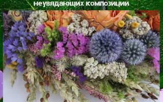 Сухоцветы многолетние и однолетние, название, букет своими руками