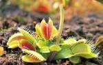 Хищные растения — какие бывают, что едят, где растут, видео