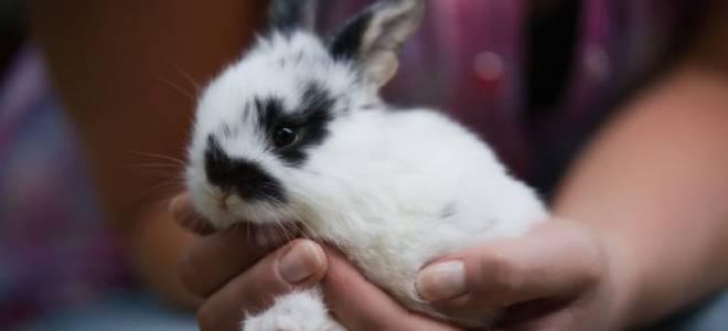 Как дрессировать кроликов: приручение, трюки, видео