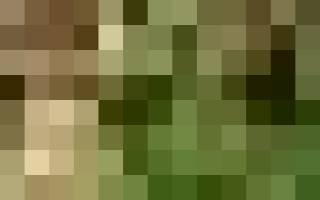 Растение самшит вечнозеленый: фото, посадка и уход + видео