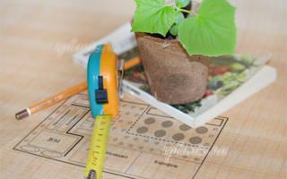 Что посадить на огороде, чем засадить огород, посадить на участке