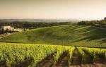 Как применять новалон для удобрения винограда, видео
