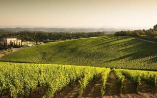 Азофоска: применение для винограда, видео