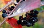 Рецепты черноплодной рябины на зиму — компот, наливка, аджика