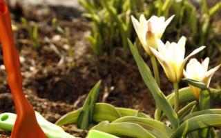 Какие работы проводят на огороде весной — видео
