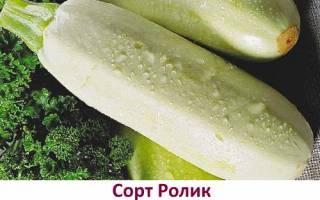Обзор лучших сортов кабачков для Урала и Сибири с фото и описанием