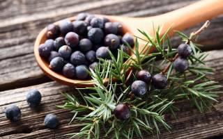 Ягоды можжевельника — лечебные свойства и противопоказания, применение в кулинарии, приготовления настоек, видео