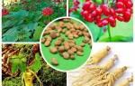 Выращивание женьшеня из семян, выбор материала, уход, видео