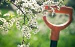 Весенние работы в саду в мае месяце, уход за плодовыми деревьями и кустарниками, видео