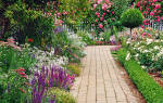 Иберис вечнозеленый — посадка и уход, фото, видео