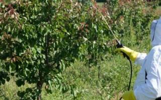 Актеллик инсектицид — инструкция по применению на грядках и для комнатных растений, видео