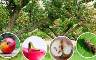 Как бороться с вредителями и болезнями яблонь + видео