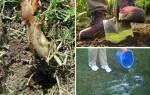 Как избавиться от медведки народными способами, видео