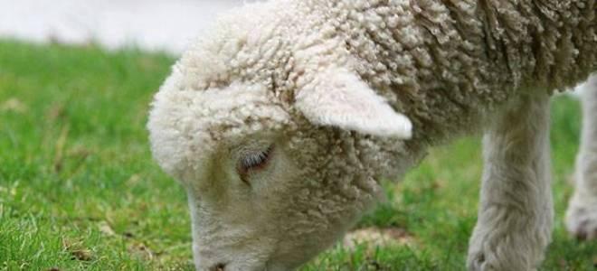 Октябрь на хоздворе — подготовка помещений, кормов для животных, видео