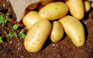 Чем может быть полезен картофель при его использовании в диетологии + видео