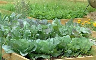 Июль на огороде — сбор первого урожая, полив, подкормка, борьба с вредителями, видео