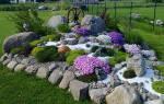 Растения для альпийской горки — фото и названия, правила оформления, видео