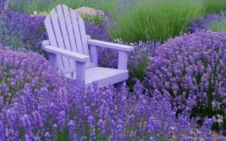 Какие низкорослые цветы выбрать для клумбы — фото, видео