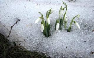 Клумбы в марте месяце — первые цветы, подготовка к сезону, уход за комнатными цветами, видео